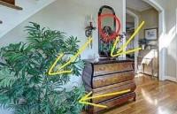 家里摆植物有什么讲究?这三个地方要摆上植物!